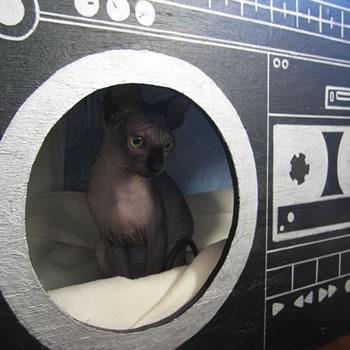 Katt som bor i bergspränagre