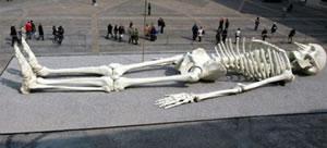 Fett skelett