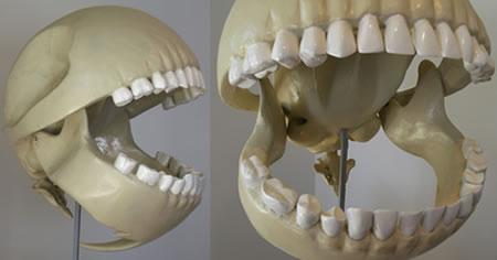 Pac-Man-skelett