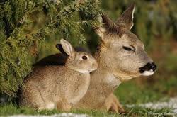 Bambi & Stampe
