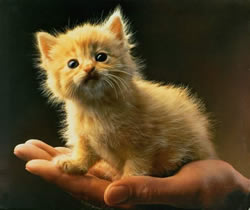 Hellre en katt i handen...