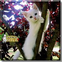 Katten Mylo
