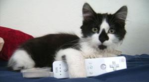 Wii-katt